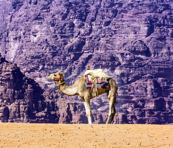 желтый песчаная дюна верблюда долины луна ром Сток-фото © billperry