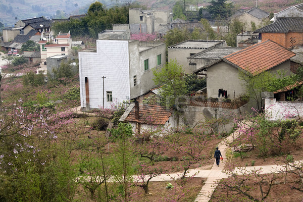 Chinese Peasant Village, Peach Orchard, Crossroads, Sichuan, Chi Stock photo © billperry