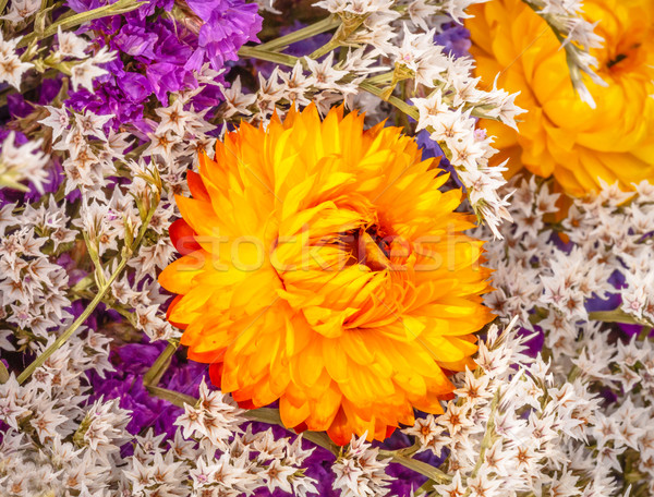 Photo stock: Séché · orange · fleur · souffle · floraison · bouquet