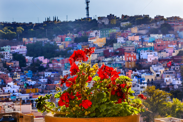 Stock photo: Red Geranium Many Colored Houses Guanajuato Mexico