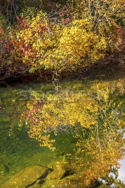 żółty czerwony pozostawia kolory jesieni zielone wody Zdjęcia stock © billperry