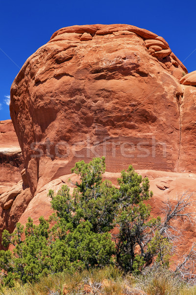 Garden Gnome Rock Formation Canyon Arches National Park Moab Uta Stock photo © billperry