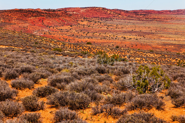 Stock photo: Painted Desert Yellow Grass Lands Orange Sandstone Red Hillst Ar