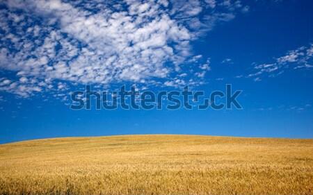 Olgun Washington hazır hasat manzara Stok fotoğraf © billperry