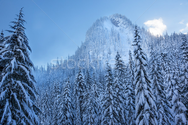 Snow Covered Evergreens Forest Snow Mountain Peak Snoqualme Pass Stock photo © billperry