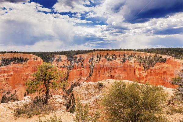 Arbre point canyon parc Utah nature Photo stock © billperry