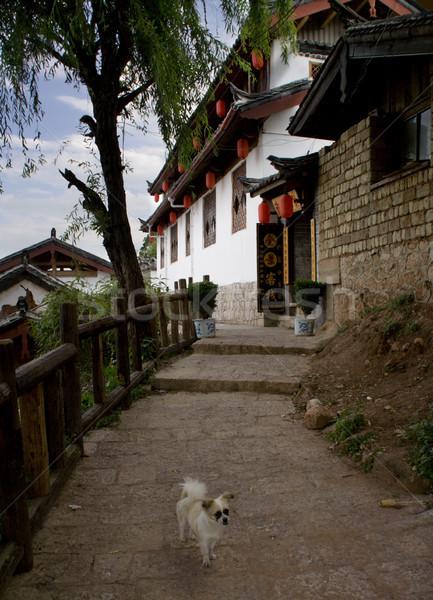 Edad ciudad China perro posada barrio antiguo Foto stock © billperry
