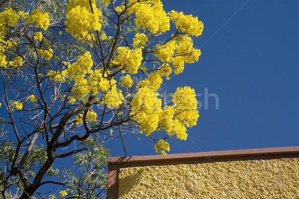 желтый цветок коричневый стены Мексика дерево Сток-фото © billperry
