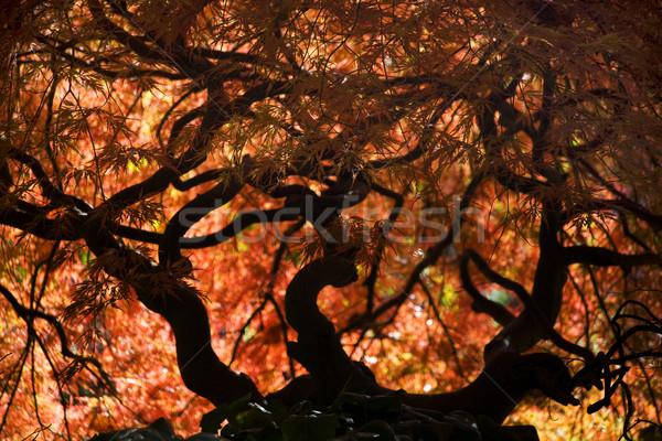 Japonês bordo cair tem jardim Vancouver Foto stock © billperry