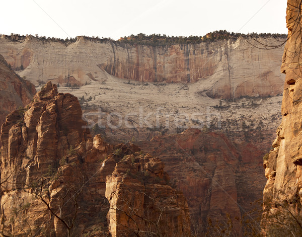 White Red Canyon Walls Zion Canyon National Park Utah  Stock photo © billperry