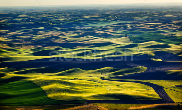 зеленый пшеницы полях черный землю структур Сток-фото © billperry