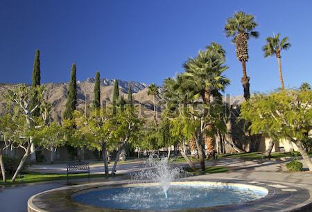 Fan palmiers arbres bleu fontaine Palm Photo stock © billperry