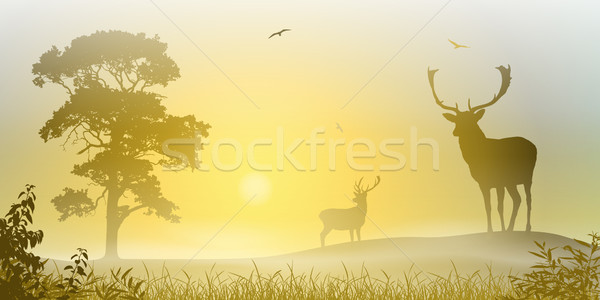 Male Stag Deer Stock photo © Binkski