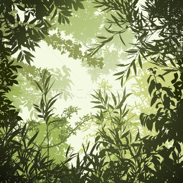 Bomen bladeren boom tuin frame Stockfoto © Binkski