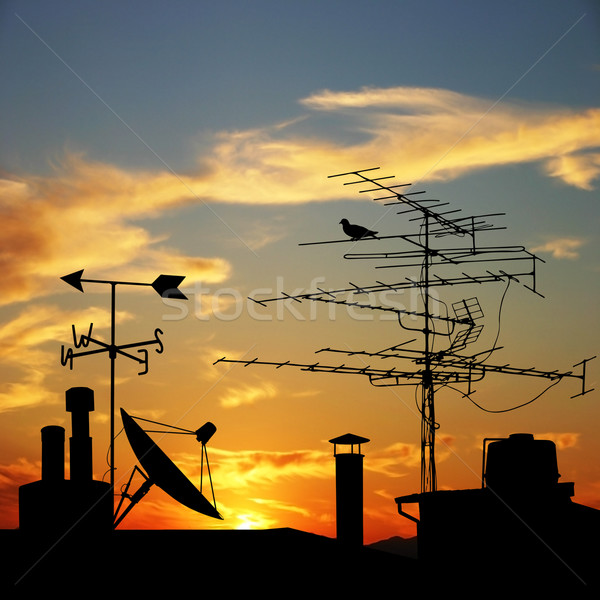 屋根 日没 鳥 日の出 シルエット ストックフォト © Binkski