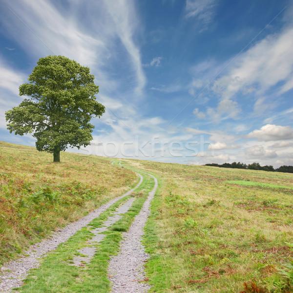 Camino árbol país cielo campo cielo azul Foto stock © Binkski
