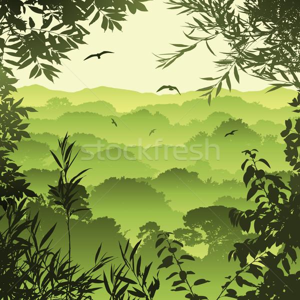 Bos landschap groene bomen bladeren achtergrond Stockfoto © Binkski