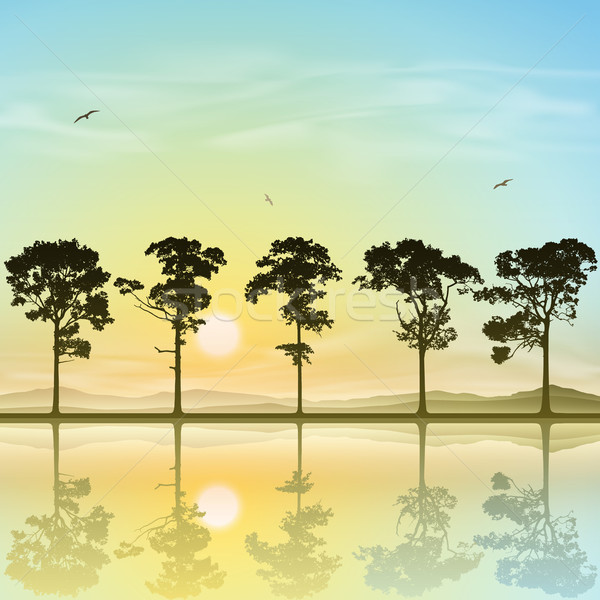 Lijn bomen silhouet zonsondergang zonsopgang landschap Stockfoto © Binkski