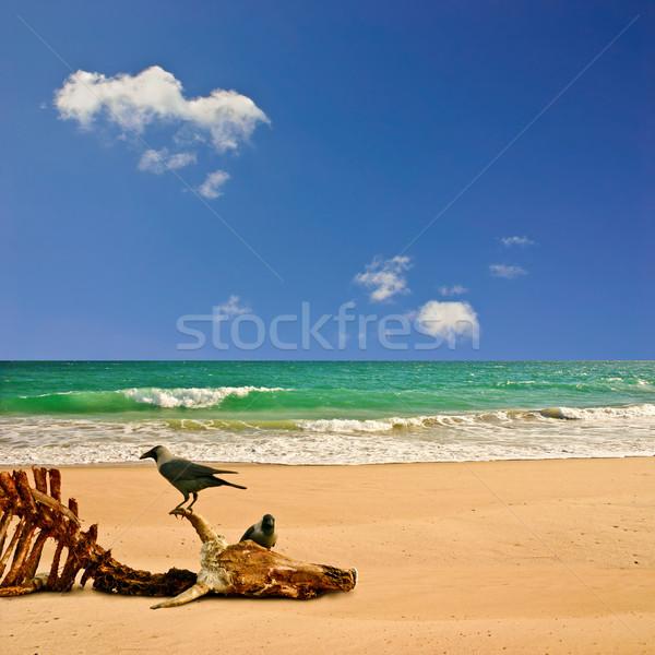 Plage paysage océan vol os squelette Photo stock © Binkski