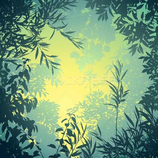 Bomen bladeren landschap silhouet plant Stockfoto © Binkski