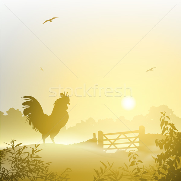 Haan mistig ochtend landschap vogel kip Stockfoto © Binkski