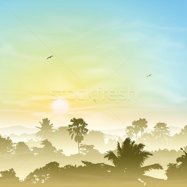 Puslu manzara palmiye ağaçları gün batımı gündoğumu orman Stok fotoğraf © Binkski