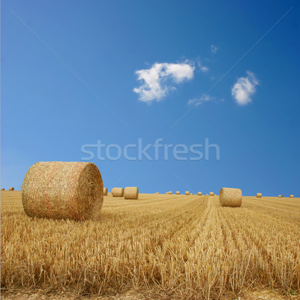 Straw Bales Stock photo © Binkski