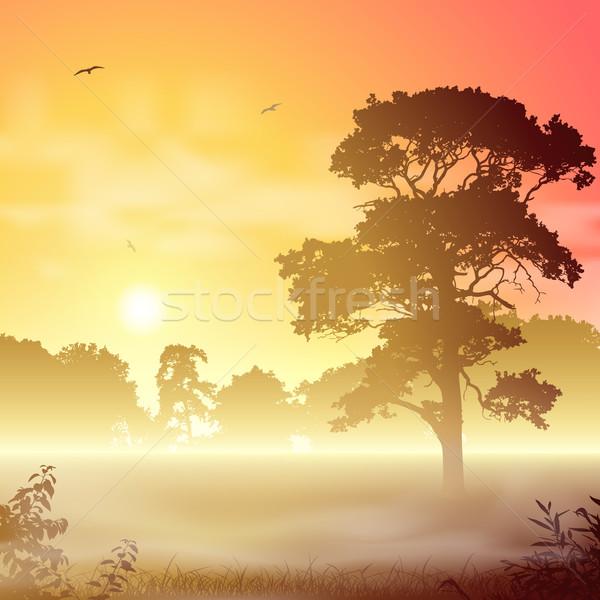 Foto d'archivio: Misty · panorama · foresta · alberi · tramonto · sunrise