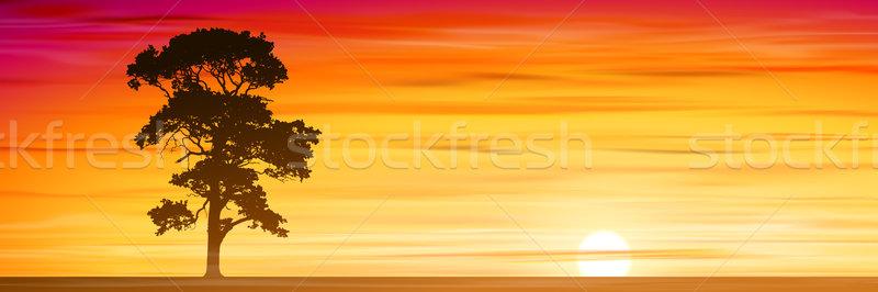 Arbre misty coucher du soleil sunrise vecteur Photo stock © Binkski