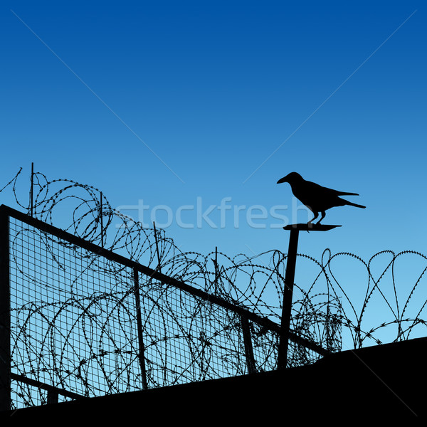 Barbwire Stock photo © Binkski