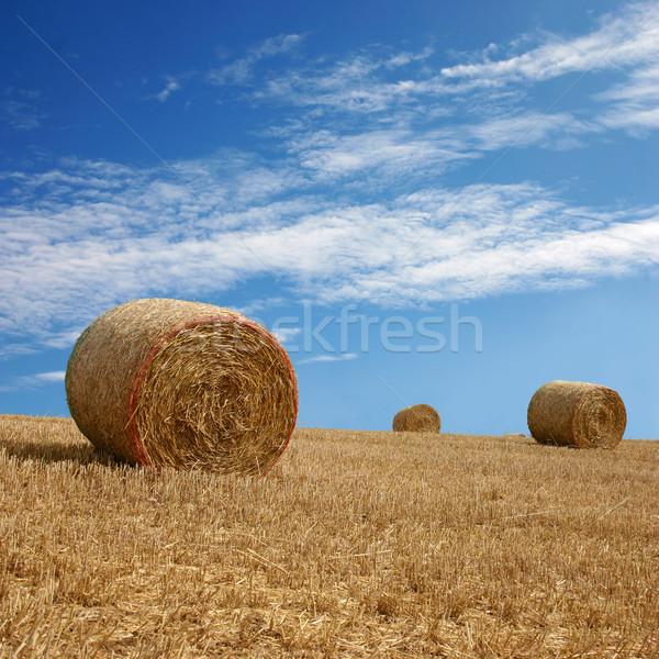 Szalmaszál farm kék ég tájkép mező kukorica Stock fotó © Binkski
