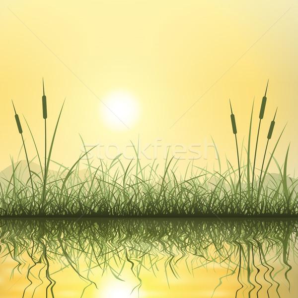 Gras reflectie water landschap groene zonsopgang Stockfoto © Binkski