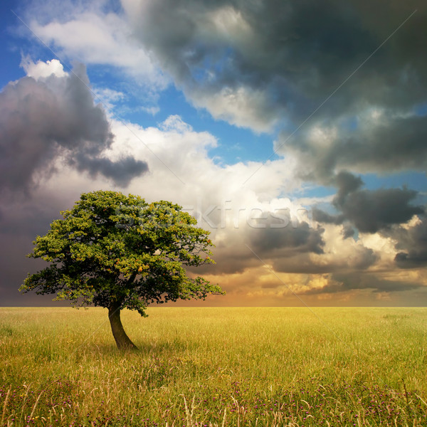 Lone Tree Stock photo © Binkski