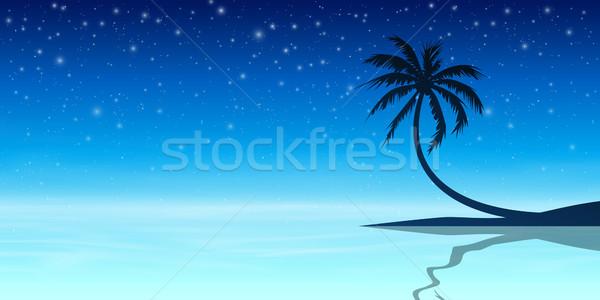 Hurma ağacı siluet gece gökyüzü Yıldız vektör eps Stok fotoğraf © Binkski