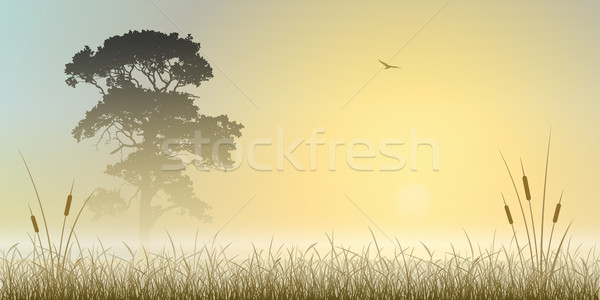Misty Landscape Stock photo © Binkski