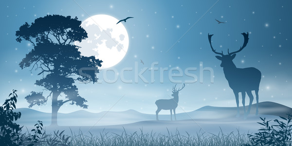 Mannelijke herten mistig weide nachtelijke hemel maan Stockfoto © Binkski