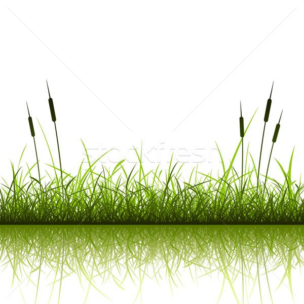 çim yansıma su bitki basit Stok fotoğraf © Binkski