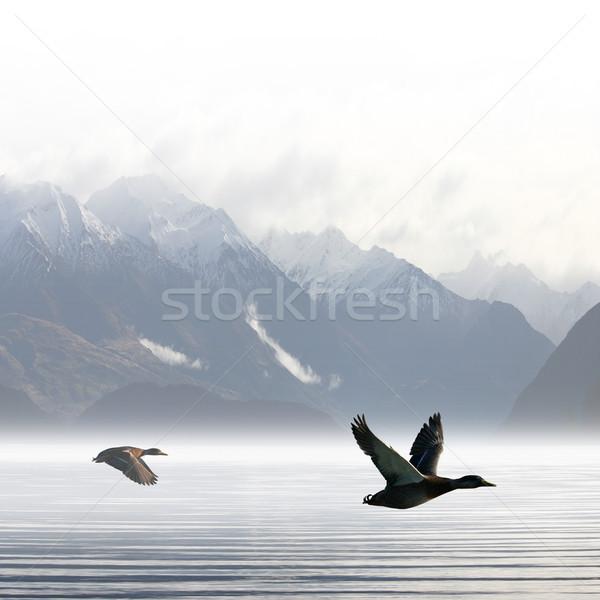 Due battenti lago nubi neve uccello Foto d'archivio © Binkski