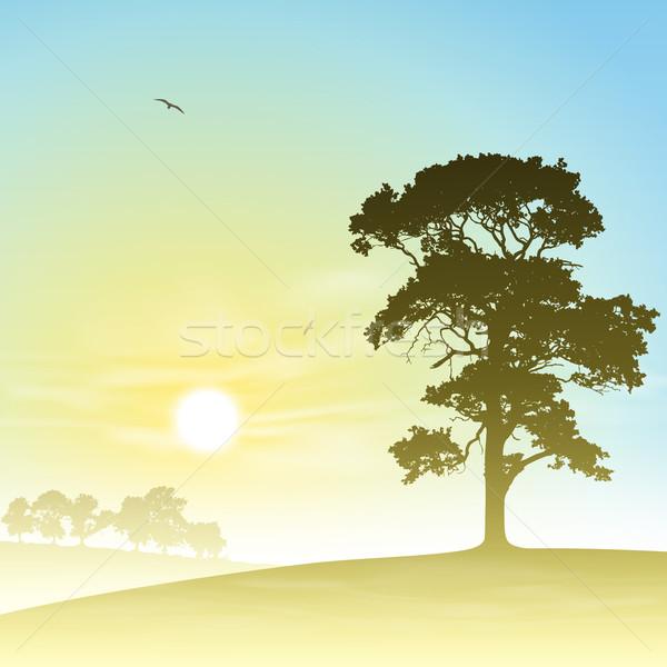 Weide landschap land bomen zonsondergang zonsopgang Stockfoto © Binkski