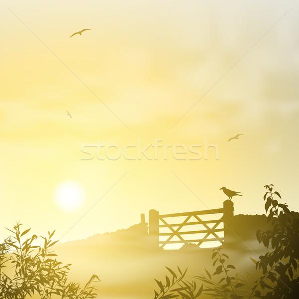 Misty mattina panorama sunrise tramonto campo Foto d'archivio © Binkski