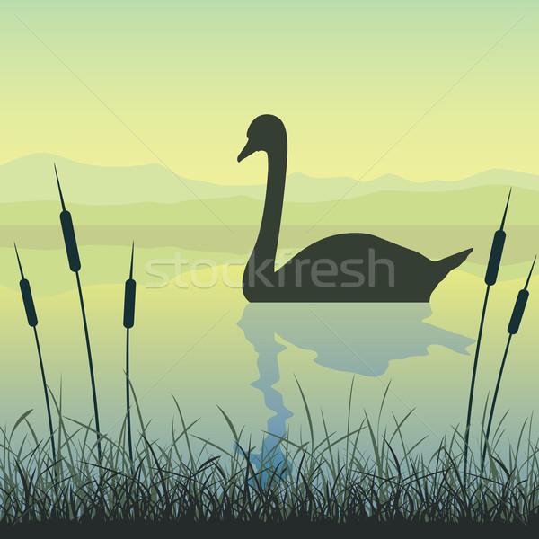 Cisne lago agua paisaje río pato Foto stock © Binkski