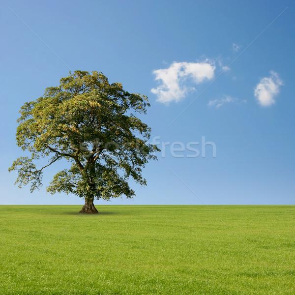 Egyedüli fa áll egyedül kék ég fű Stock fotó © Binkski