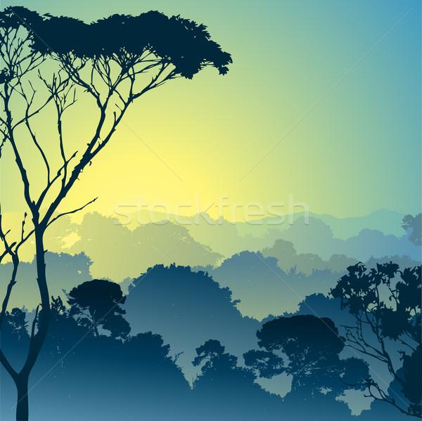 Bos landschap bomen achtergrond silhouet jungle Stockfoto © Binkski