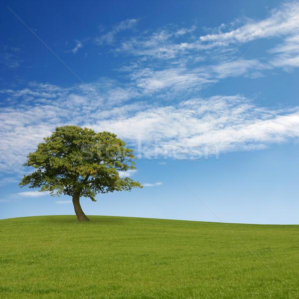 Egyedüli fa kék ég fű felhők Stock fotó © Binkski