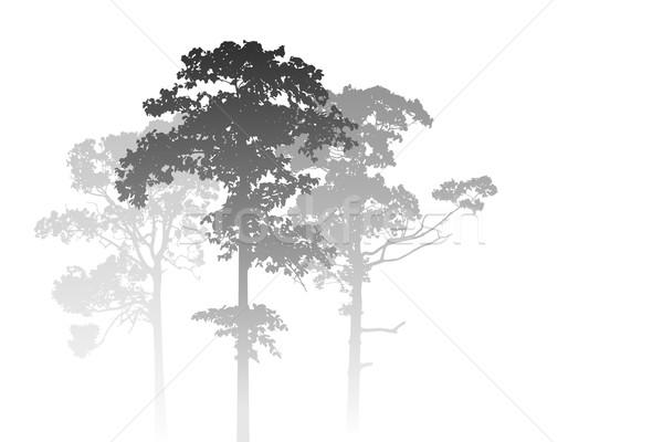 霧の 森林 風景 白 木 背景 ストックフォト © Binkski