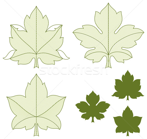 Set of leaves Stock photo © Bisams