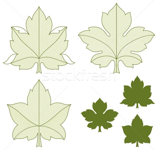 セット 葉 詳しい 緑の葉 ツリー 自然 ストックフォト © Bisams