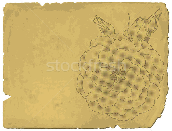Rose on old paper Stock photo © Bisams
