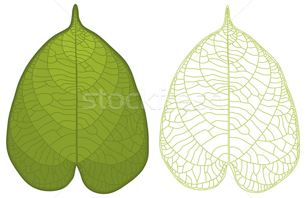 Detailed leaf  Stock photo © Bisams