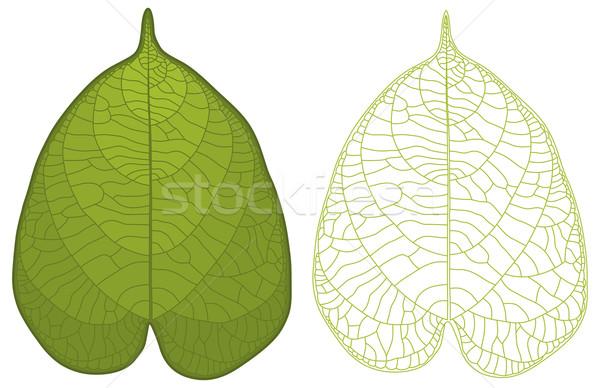 Gedetailleerd blad geïsoleerd groen blad ader Stockfoto © Bisams